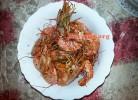 Škampi